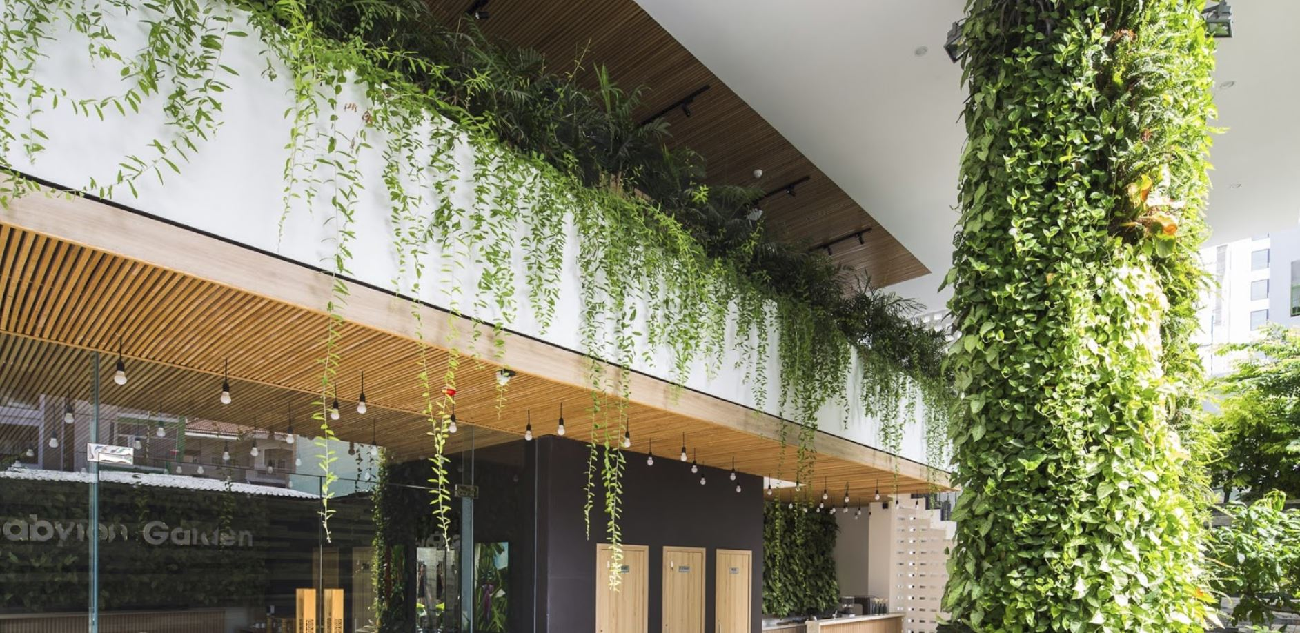 Plantas para balcones for Plantas para balcones