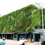 ¿Qué son las fachadas verdes?